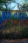 Over the past forty years Chihuly has explored colors, lines, and assemblage.